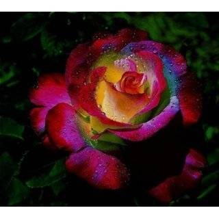 Rainbow Roses Grocery & Gourmet Food