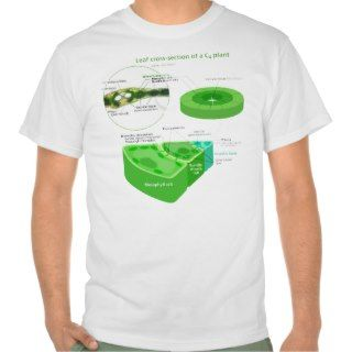 Simplified C4 Photosynthesis Diagram T Shirts