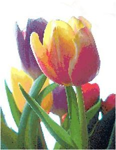 Tulip Counted Cross Stitch Pattern Flower Floral Spring
