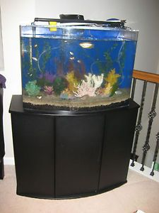 Seaclear Bowfront 36 Gallon Aquarium 1000 Aquarium Ideas