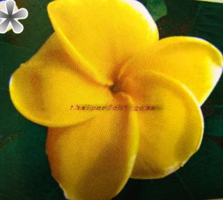 "Plumeria Plants Flowers ""4714"" Fresh 55 Seeds RARE"