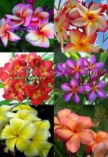 "Plumeria Frangipani Flowers Plants ""Mixed"" 115 Seeds"