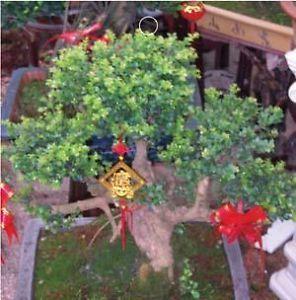 SD5000 Green Bonsai Grass Indoor House Plants Seeds New Fresh Seeds 100 Seeds
