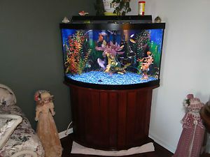 55 gallon bow front corner fish tank aquarium all glass for Corner fish tank for sale