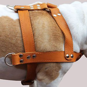 "Real Leather Dog Pulling Harness 33"" 37"" Chest Size Mastiff Cane Corso XLarge"