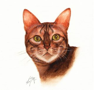 ★ Original Oil Cat Portrait Painting Bengal Art on Canvas Kitten Artist Signed
