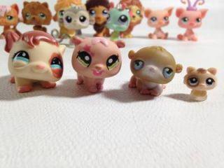 36 PC Littlest Pet Shop Dachshund Husky Others Accessories