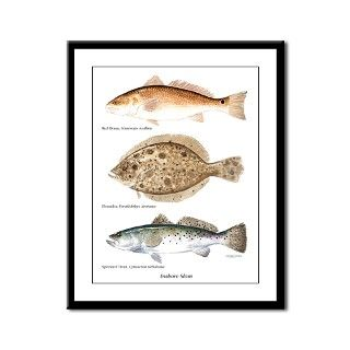 Inshore Slam Framed Panel Print by jkchristian