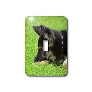 3dRose lsp_21185_1 German Shepherd Puppy Single Toggle Switch