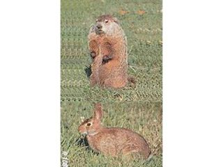 Delta Sports Products Delta #108 Woodchuck & Rabbit Target